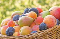 Autumn is rich in fruits Stock Image