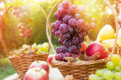Autumn is rich with sweet fruits Royalty Free Stock Photography
