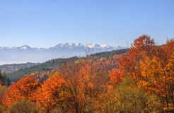 Autumn in Rila Mountain Royalty Free Stock Photos