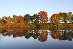 Autumn river. Autumn trees under the water Royalty Free Stock Images