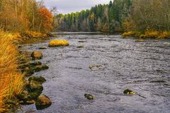 Autumn River arkivbild