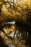 Autumn river. Landscape of autumn sunlight on a river stock photos