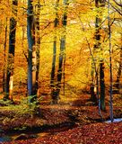 Autumn river. Yellow forest in Denmark, late afternoon Royalty Free Stock Photos