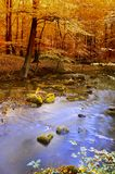Autumn river Royalty Free Stock Photos