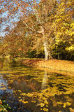 Autumn by the River Royalty Free Stock Images