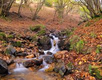 Autumn in the river Royalty Free Stock Image