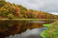 Autumn river. The quiet river with yellow-red autumn wood on coast Royalty Free Stock Images