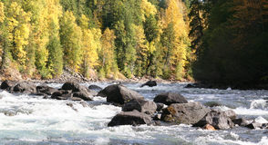 Autumn River. A river and forest Stock Image