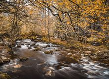 Autumn River stockbild