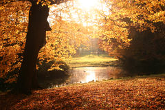 Autumn river. Autumn trees at a river in sunlight Stock Images