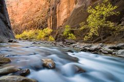 Autumn River. The Virgin River cascades over rocks with steep canyon walls illuminated by reflected light Stock Image