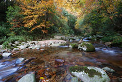 Autumn river. A river in an autumn forest Stock Photo