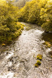 Autumn River Imagem de Stock Royalty Free