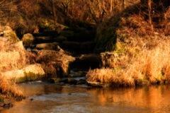 Autumn River Stock Fotografie
