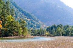Autumn River avec l'aloès de Jiuzhaigou, porcelaine Image stock