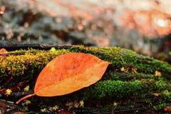 Autumn River avec la feuille Photo libre de droits