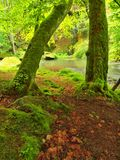 Autumn river bank, fresh green mossy stones, colorful fall Stock Photo
