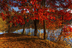 Autumn river bank in hdr Stock Images