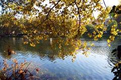 Autumn on the river bank Stock Photos