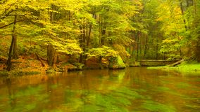 Autumn river bank with orange beech leaves. Fresh green leaves on branches above water make reflection. Rainy evening. At stream stock footage