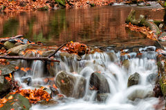 Autumn river bank with orange beech leaves. Fresh green leaves o. N branches above water make reflection. Rainy evening at stream Royalty Free Stock Photography
