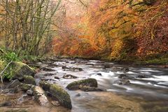 Autumn on the river barle somerset uk. Autumn colours along the river barle near Tarr steps exmoor uk Royalty Free Stock Images