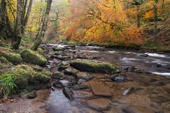 Autumn on the river barle somerset uk. Autumn colours along the river barle near Tarr steps exmoor uk Stock Photos