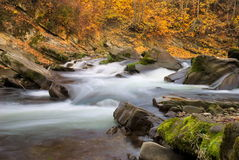 Autumn river Stock Images