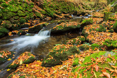 Autumn river. With coloured trees and leaves  in Peklo valley Czech republic Royalty Free Stock Photo
