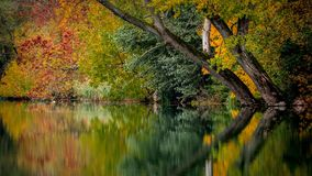 Autumn on the river Danube. Beautiful scene of autumn on the river Danube, Slovakia. Reflection of colorful trees on the river stock photos