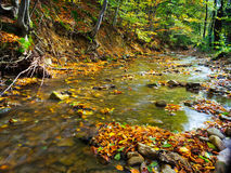 Autumn river deep in the forest Royalty Free Stock Image