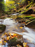 Autumn river deep in the forest Royalty Free Stock Photography