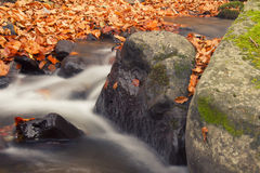 Autumn River Detail Stock Photography