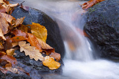 Autumn River Detail Royalty Free Stock Images
