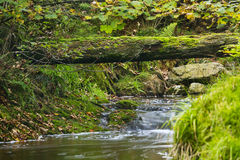 Autumn River And Fallen Tree Stock Image