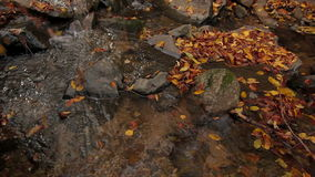 Autumn River flow down leaves stock footage