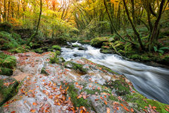 Autumn on the River Fowey Stock Photography