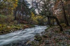 Autumn River stockbilder