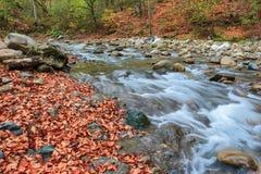 Autumn on the river Kuban. Kizinka Royalty Free Stock Image