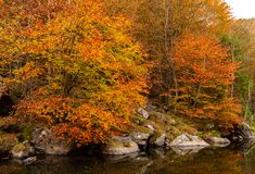 Autumn River Landscape Colors in aard stock foto