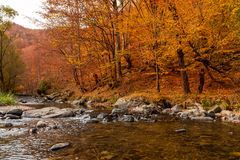 Autumn River Landscape Colors in aard stock afbeeldingen