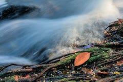 Autumn River med bladet Royaltyfri Foto