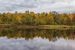 Autumn. On the river Mologa. Stock Image