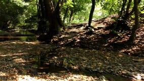 Autumn River nella natura stock footage