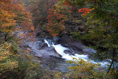 Autumn river in Nikko, Japan. A beautiful river with rapid and momiji in the forest near Nikko Sanctuary Stock Image