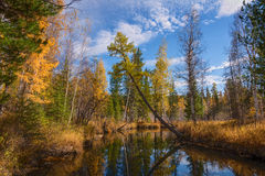Autumn River Olha Stock Images