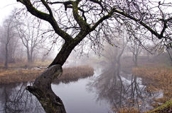 Autumn river in park and mist Royalty Free Stock Image