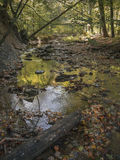 Autumn River. Peaceful Autumn River in the North Eastern United States Stock Photos