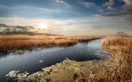 Autumn river and reeds Royalty Free Stock Images