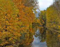Autumn river. And the reflection of trees in water Stock Photos